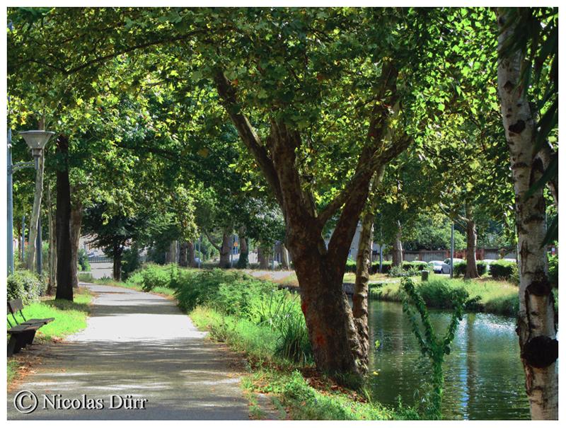 Promenade arborée sur le bief du Béarnais, 2ème bief du cours d'eau, d'une longueur de