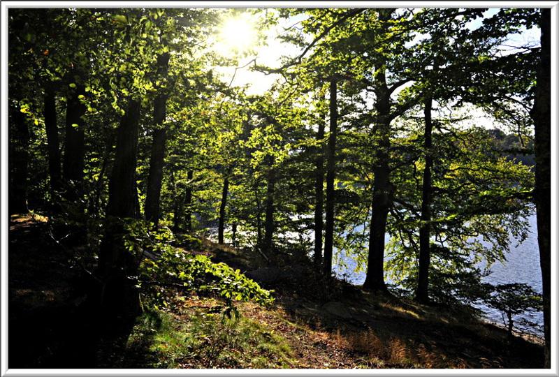 Ombres et lumières à travers les arbres
