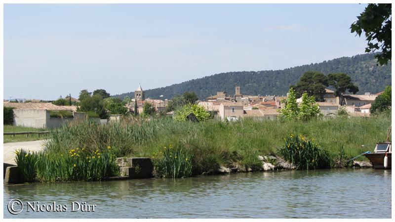 Argeliers, rive gauche sur le Canal du Midi, 2014
